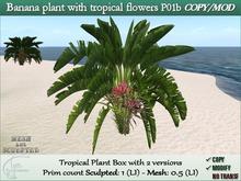 Banana plant with tropical flowers C/M-1 prim.P01b