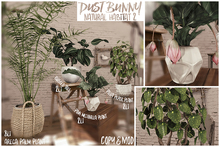 dust bunny . natural habitat 2 . fatpack . boxed . rez & touch