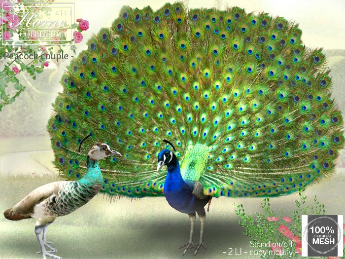 Peacock, couple