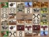 Equestrian Memory Game
