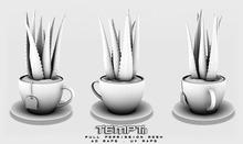 TEMPTii - ALOE TEACUP - FULL PERM
