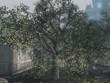 2 -DRD- Garden Party - Big Trees - RARE