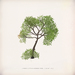 [ keke ] little tree - summer (mesh)