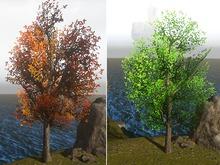 Tree 4 - Season Change