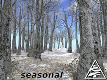 Beech forest SEASON C/M