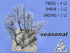 Beech forest SEASON M/T