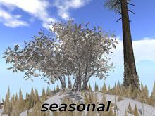 Elderberry seasonal M/T