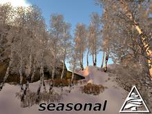 Young Birch group seasonal C/M