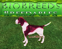 BB Biobreeds Cute Beagle unbirthed Puppy for Everyone