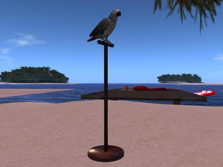 NSB Papagei