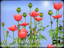 Wild Flowers - Poppies