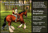 ~*WH*~ Draft horse Double Riding systems
