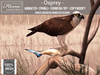 Tlc osprey