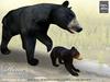 Tlc black bear