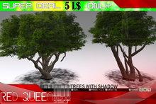 【ⓇⓆ】SUPER DEAL :: Trees