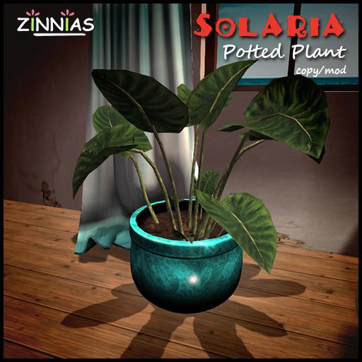 Zinnias Solaria Potted Plant