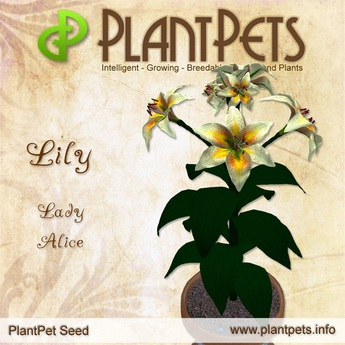 PlantPet Seed [Lily *Lady Alice*] rare (Updated!)