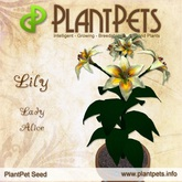 PlantPet Seed [Lily *Lady Alice*] rare
