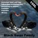 Black swan family(copyable, feedable)