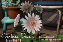 [ Organica ] Gerbera Daisies (Light Pink 1)