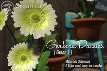 [ Organica ] Gerbera Daisies (Green 1)