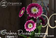 [ Organica ] Gerbera Daisies (Magenta 1)