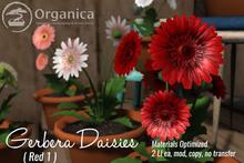 [ Organica ] Gerbera Daisies (Red 1)