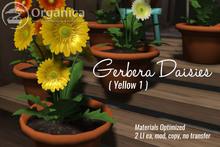[ Organica ] Gerbera Daisies (Yellow 1)