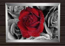 PROMO!!! H&B Creations picture frame Red Rose