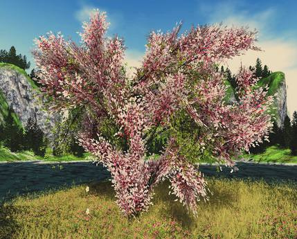 Aphrodite Heart tree - Valentines day tree mixed colors