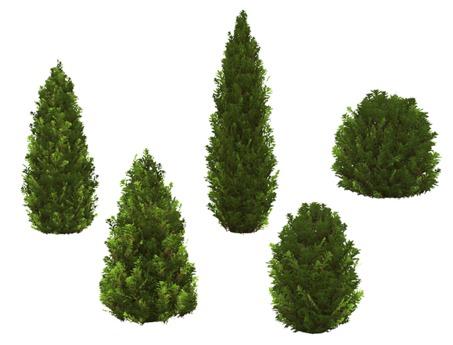 Evergreen Bush Pack