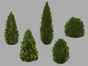 Evergreen bushes pack