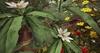 Cj colors of life garden boat spring 06