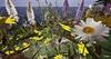 Cj colors of life garden boat spring 05