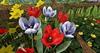 Cj colors of life garden boat spring 07