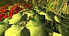 Cj colors of life garden boat spring 09