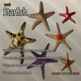 Mesh Starfish Pack 1