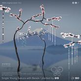 8f8 - Single Young Sakura with Beads