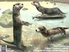 Tlc river otter