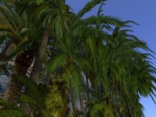 Half Palm Trees 3D wall - 5 parts