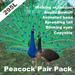 Peacock Pair Pack(copyable, feedable)