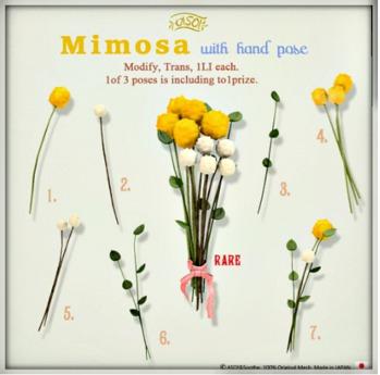 ASO! Mimosa 4