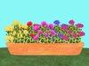 Geranium Flowerbox/Planter 4