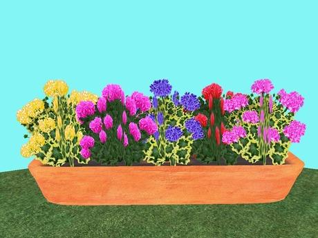 Geranium Flowerbox/Planter 2