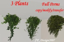 3 Hanging Plants
