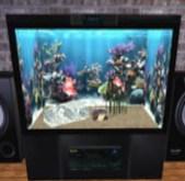 Aquarium / Fish tank / Fishtank