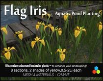 Iris Pseudacorus pond, & wetland plants