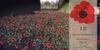Lb redpoppies field  sl