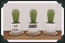 floorplan. potted cactus [boxed]
