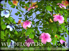 Heart - Wild Flowers - Hibiscus